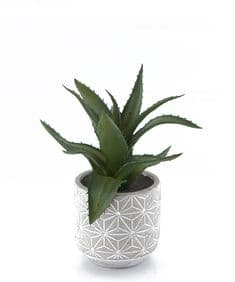 Succulent in geometric patterned pot